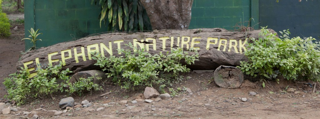 Elephant Nature Park: The Happiest Place on Earth!